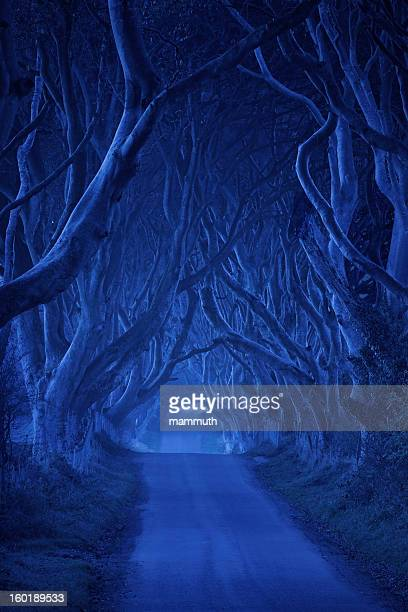 treelined road in the night - county antrim stock pictures, royalty-free photos & images