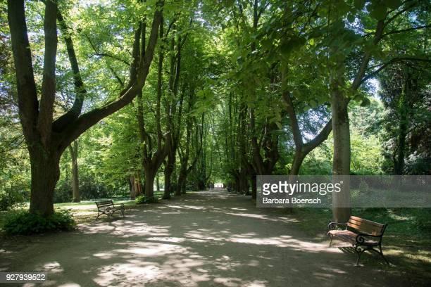 tree-lined road, lime trees, rombergpark, stadtpark, dortmund, ruhr area, north rhine-westphalia, germany - dortmund città foto e immagini stock