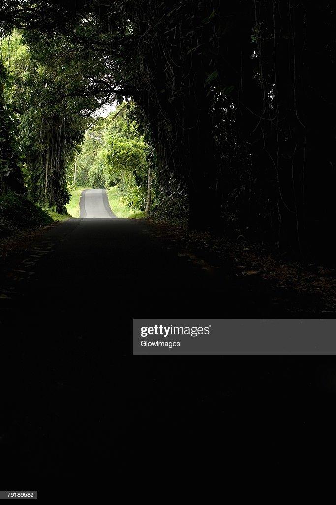 Treelined road passing through a landscape, Kalapana, Big Island, Hawaii Islands, USA : Stock Photo