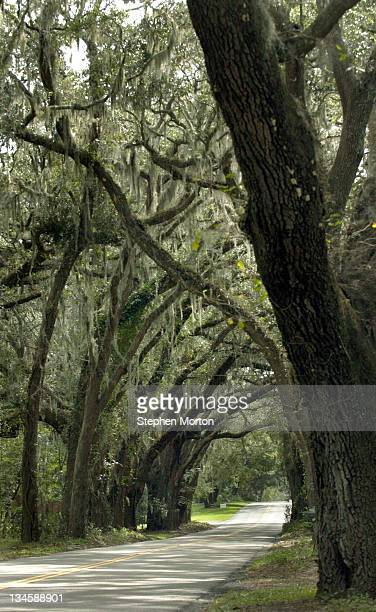 A treelined section of Amelia Island greets motorists as they make their way to the Amelia Island's best golf courses