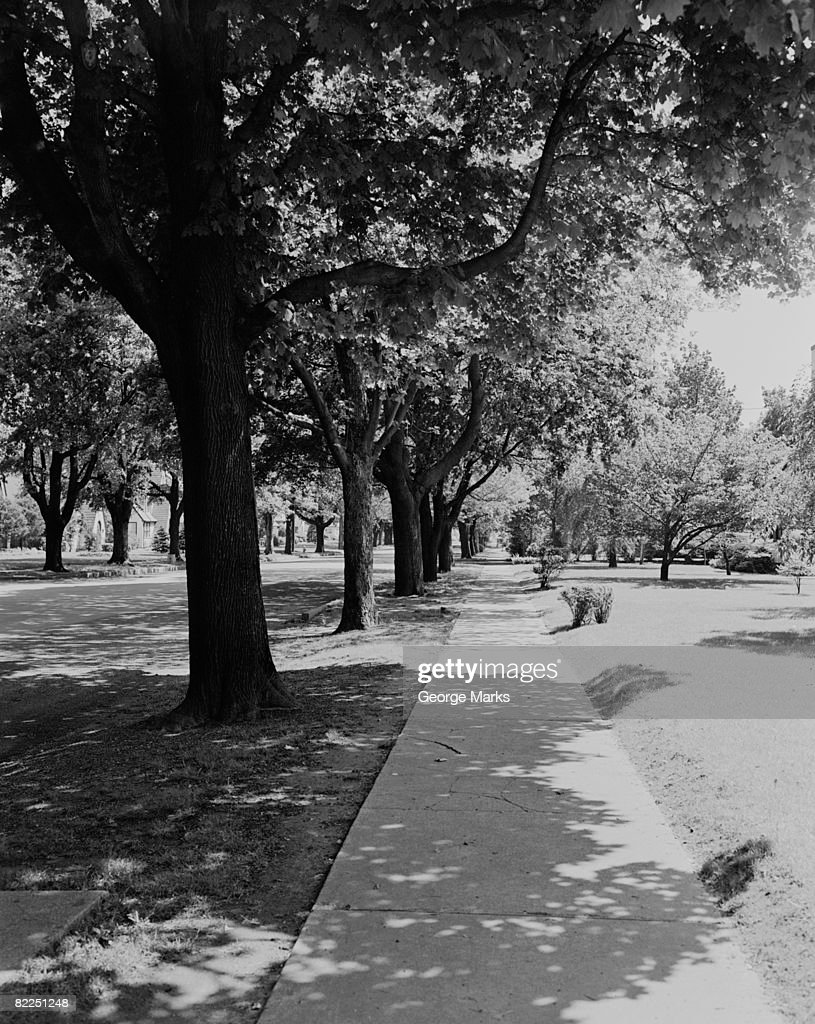 Treelined street with sidewalk : Stock Photo