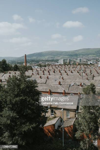 treelined terrace houses on a sunny day - belfast stock pictures, royalty-free photos & images