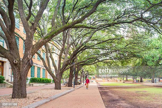 treelined walkway at university of texas at austin usa - university of texas at austin stock pictures, royalty-free photos & images
