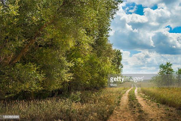 tree-lined West Texas meandering dirt road