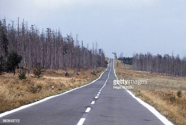 Trees affected by acid rain in Czechoslovakia