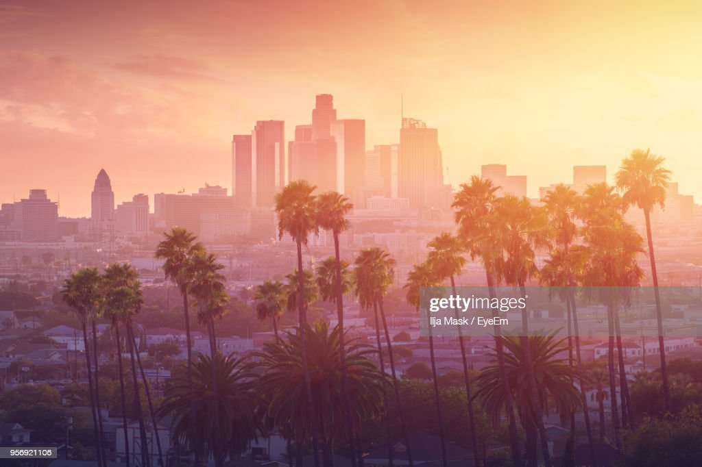 Trees Against Cityscape During Sunset : Stock Photo