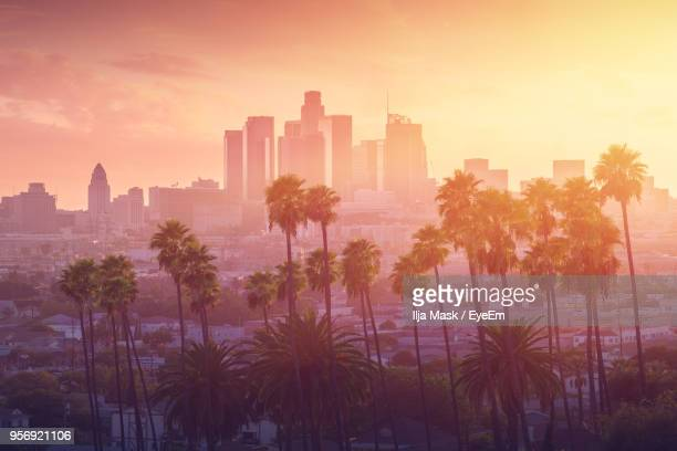 trees against cityscape during sunset - de stad los angeles stockfoto's en -beelden