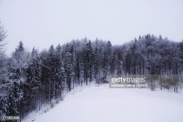 trees against clear sky during winter - anfang stock pictures, royalty-free photos & images