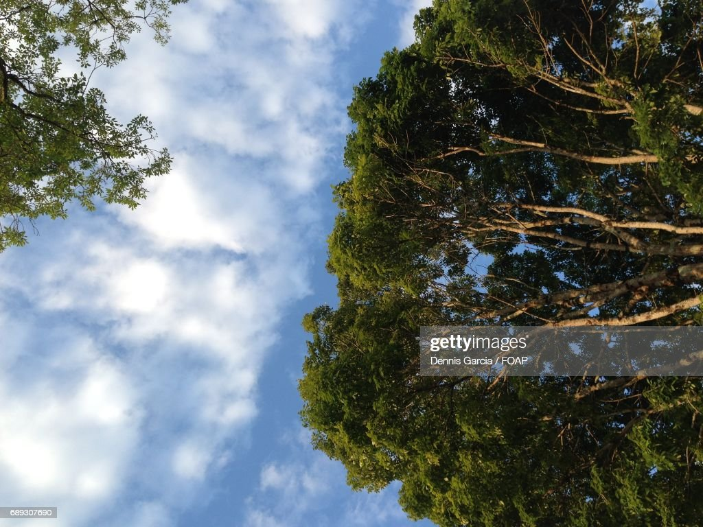 Trees against cloudy sky : Stock Photo