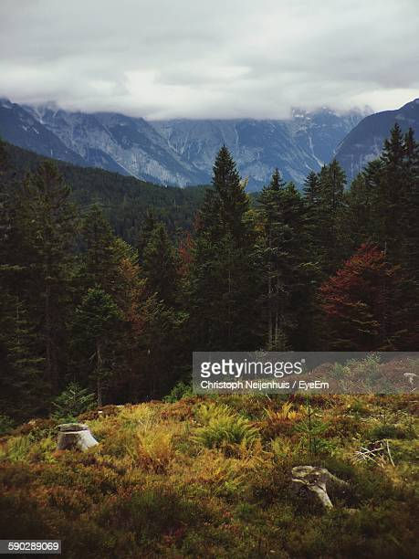 Trees Against Mountains During Autumn