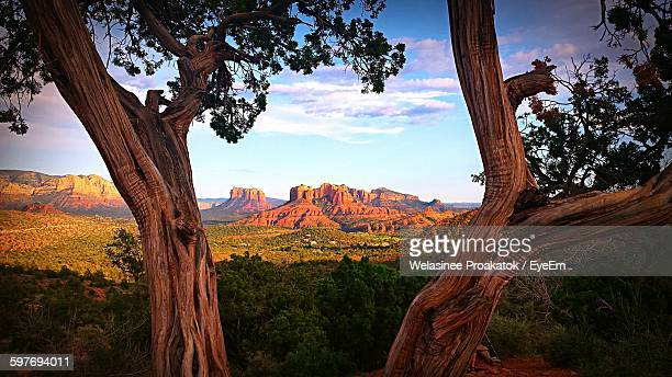 trees against red rock canyon national conservation area - nevada stock pictures, royalty-free photos & images