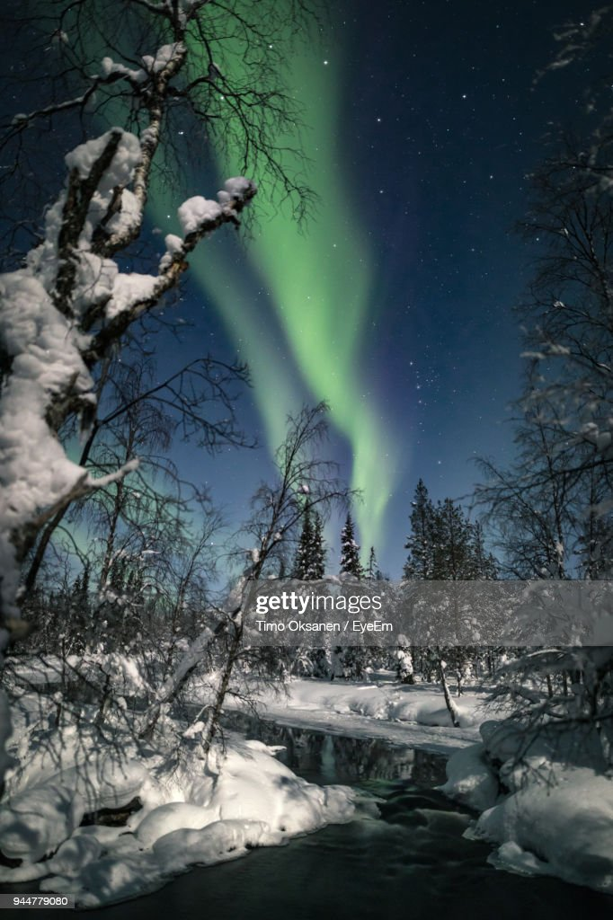 Trees Against Sky At Night During Winter : Stock Photo
