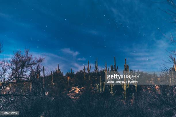 trees against sky at night - tucson stock pictures, royalty-free photos & images