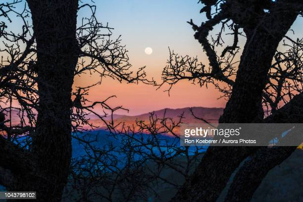 trees against sky at sunset in henry w. coe state park - koeberer stock photos and pictures