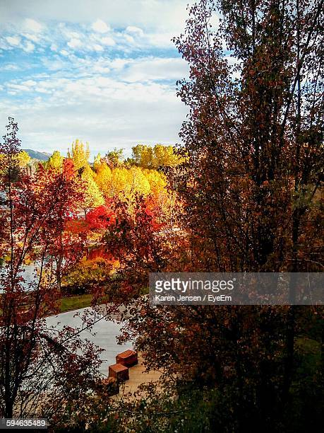 trees against sky during autumn - karen jensen stock photos and pictures