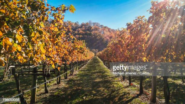 trees against sky during autumn - shenandoah_national_park stock pictures, royalty-free photos & images