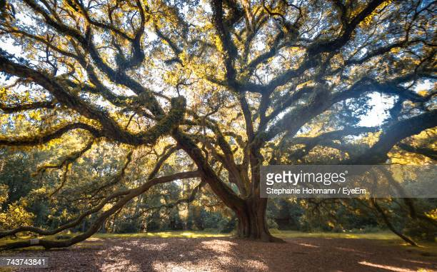 trees against sky during autumn - tallahassee stock pictures, royalty-free photos & images