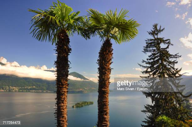 trees against sky during sunset - ascona stock photos and pictures
