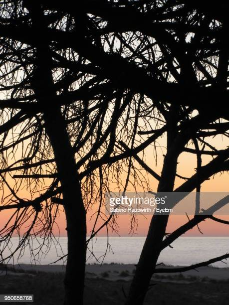 trees against sky during sunset - sabine hauswirth stock pictures, royalty-free photos & images