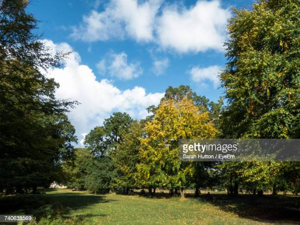 trees against sky - hutton stock photos and pictures