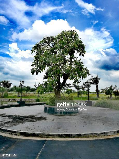 trees against sky - surabaya stock pictures, royalty-free photos & images