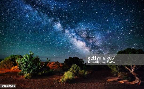 trees against star field at night - state park stock pictures, royalty-free photos & images