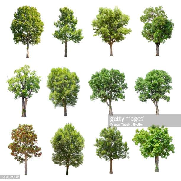 trees against white background - freisteller neutraler hintergrund stock-fotos und bilder
