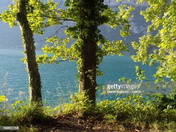 trees against yellow water - marek stefunko stockfoto's en -beelden