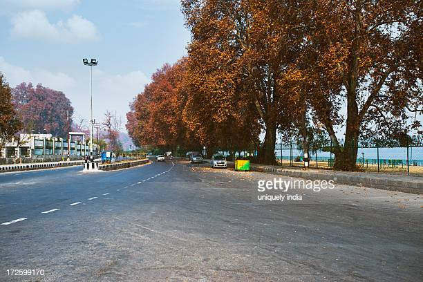 Trees along a road, Kashmir, Jammu And Kashmir, India