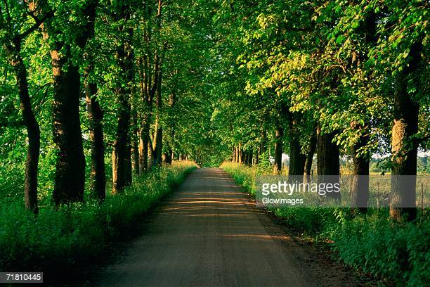trees along a road, vaxjo, sweden - vaxjo stock pictures, royalty-free photos & images