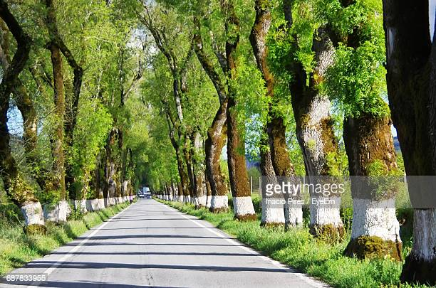 Trees Along Narrow Pathway