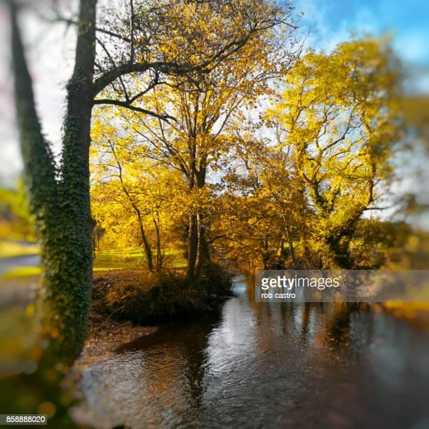 Trees Along Stream in Blarney