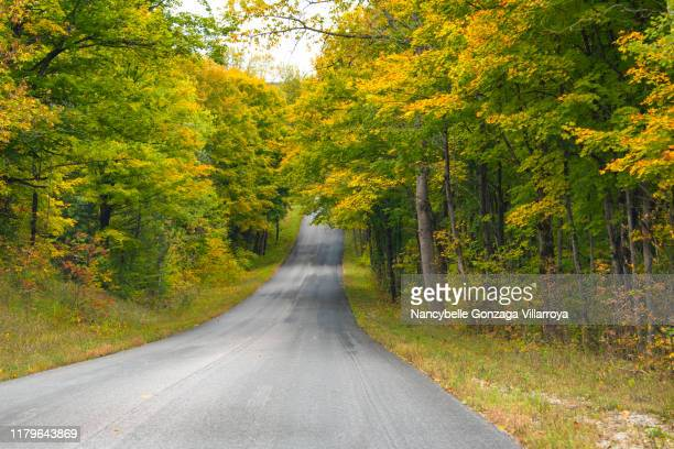 trees along the country road starting to change to autumn colours - barrie stock pictures, royalty-free photos & images