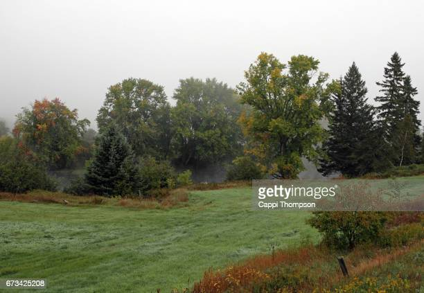 trees along the river on a foggy day - cappi thompson stock pictures, royalty-free photos & images