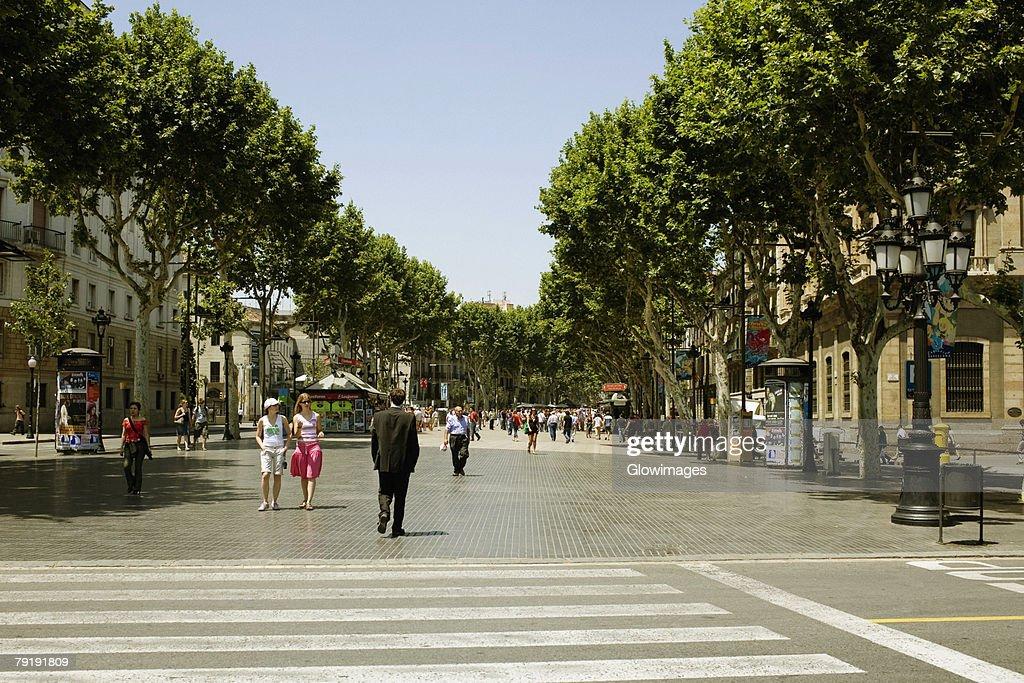 Trees along the road, Barcelona, Spain : Stock Photo