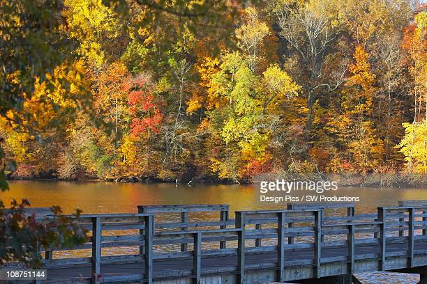 Trees Along The Shoreline In Autumn And A Wooden Bridge