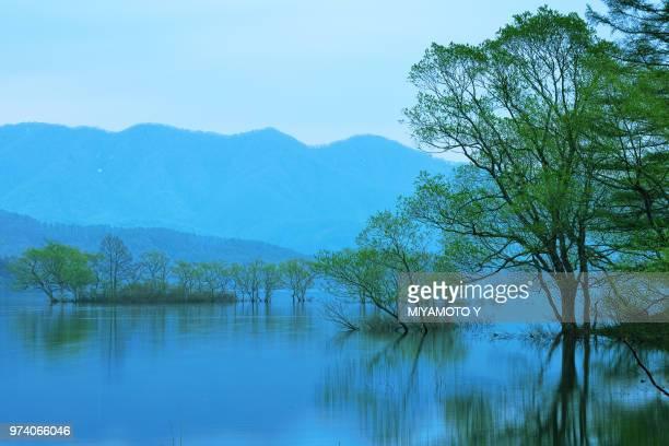 trees amid lake, hibara lake, fukushima, honshu, tohoku, japan - miyamoto y ストックフォトと画像