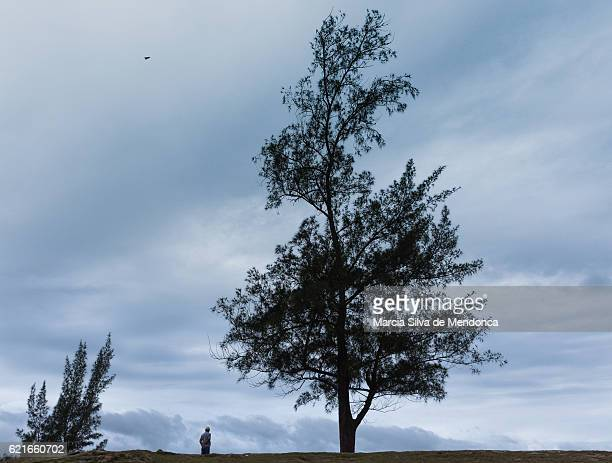 """trees and a lonely man, in saquarema"" - arbusto stock pictures, royalty-free photos & images"