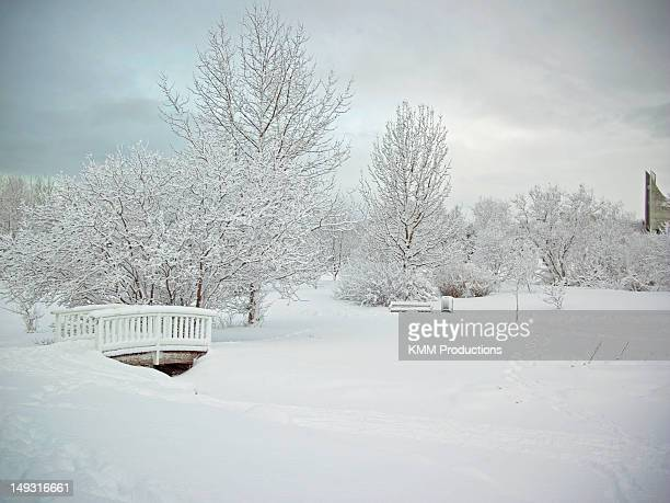Trees and bridge in snowy landscape