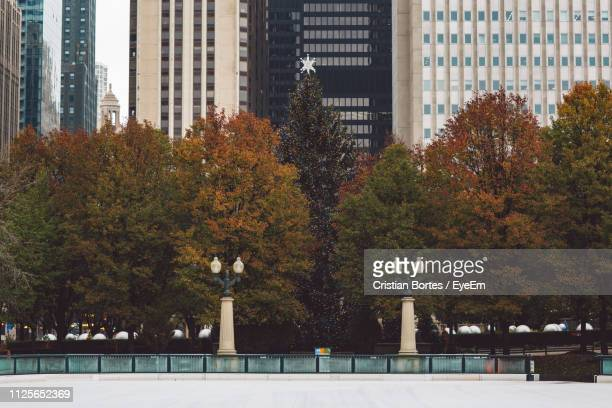 trees and buildings in city - bortes stock pictures, royalty-free photos & images