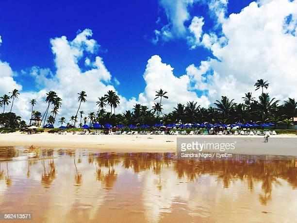 trees and clouds reflected in water at porto de galinhas beach - porto galinhas stock photos and pictures