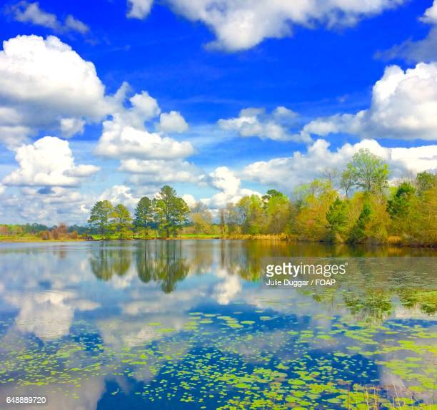 Trees and clouds reflecting on lake