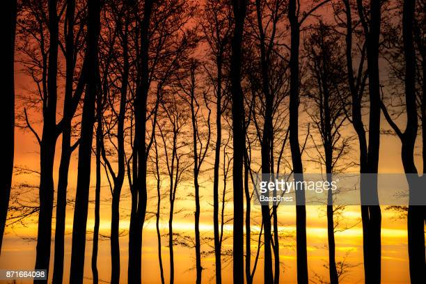 Trees and colorful sky