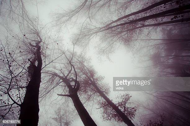 trees and dark foggy day - bare tree stock pictures, royalty-free photos & images