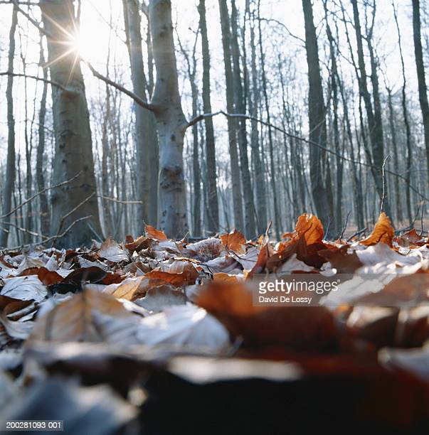 Trees and dead leaves in forest
