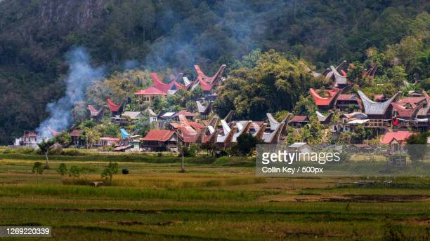 trees and houses on field, rantepang, indonesia - collin key stock-fotos und bilder
