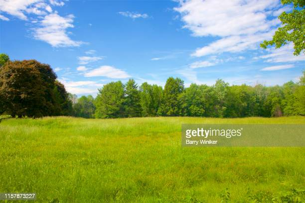 trees and meadow at topsmead state forest, litchfield, ct - barry wood stock pictures, royalty-free photos & images