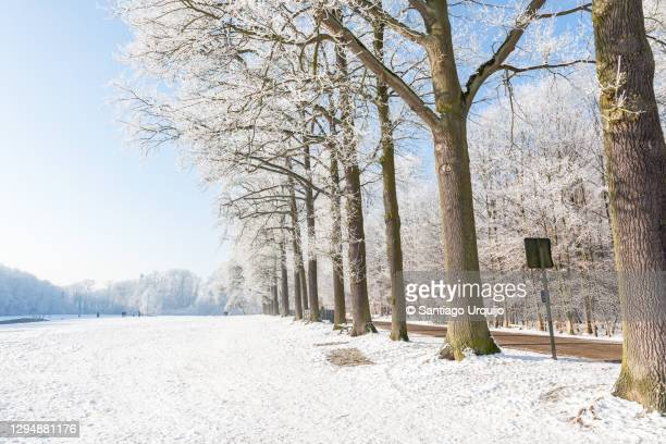 trees and meadow covered in frost in tervuren park - capital region stock pictures, royalty-free photos & images