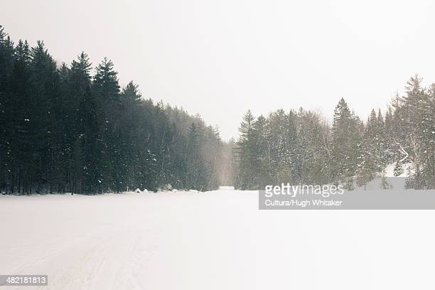 Trees and meadow in snowy landscape