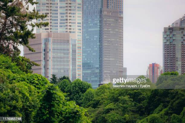 trees and modern buildings in city against sky - seiichiro hayashi ストックフォトと画像